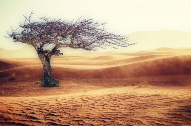 No olvidar el Cambio Climatico otra amenaza mas bajo la condicion humana - Vertederos